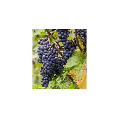 pinot noir mixed case to dicover this grape variety