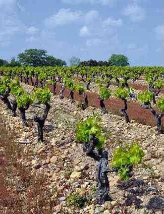 domaine-les-creisses-vignes